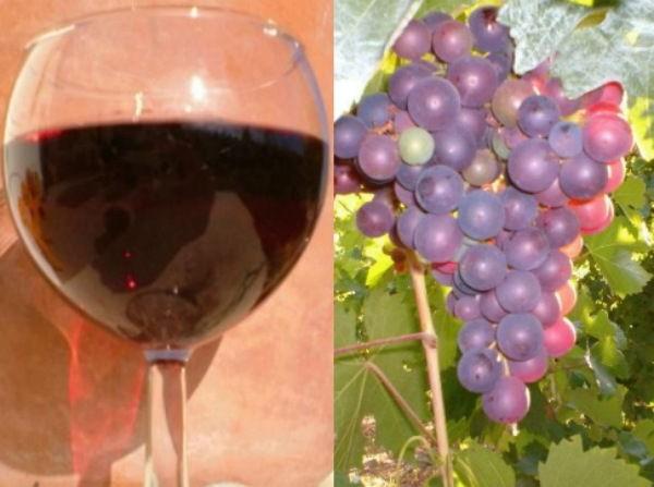 Домашний виноград рецепт