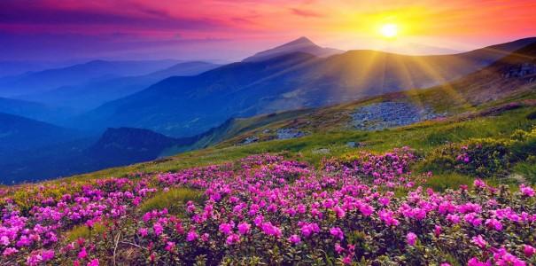 Красота растений летом 141