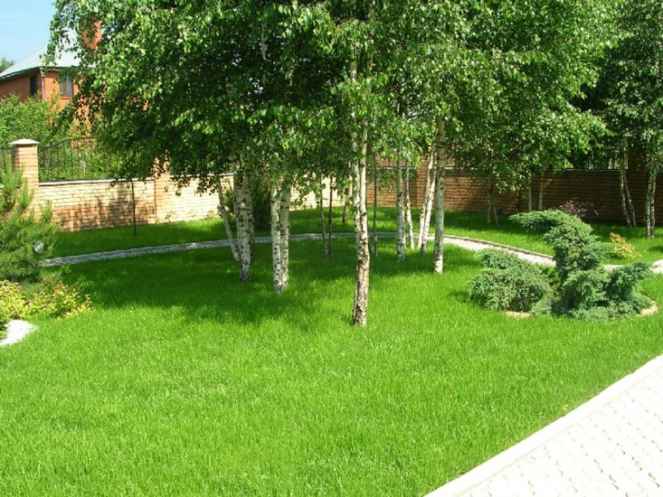 Дизайн деревьев на участке